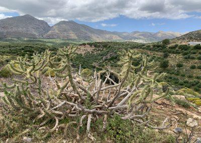 special vegetation